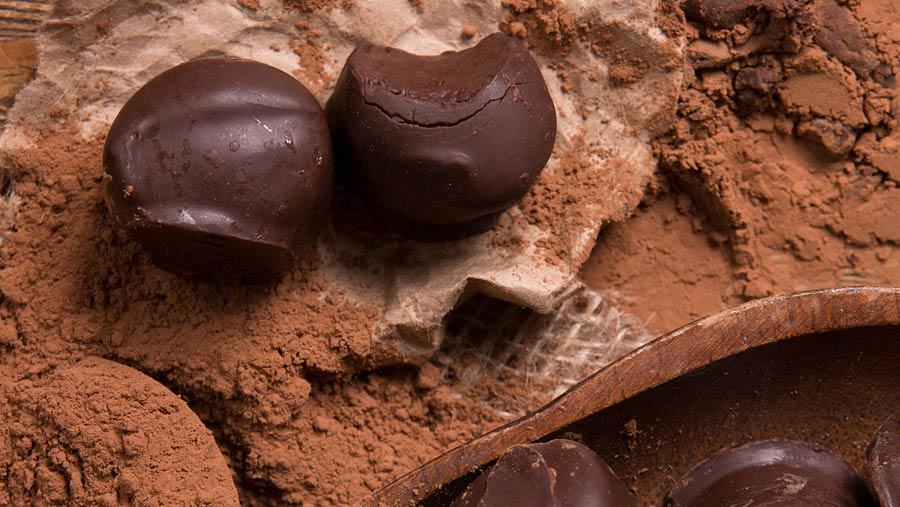 SkinnyMe Premium Sugar Free Chocolate